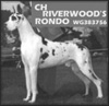 BISS CH Riverwood's Rondo